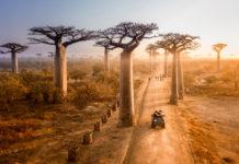 Die Baobaballee in Madagaskar bei Sonnenuntergang