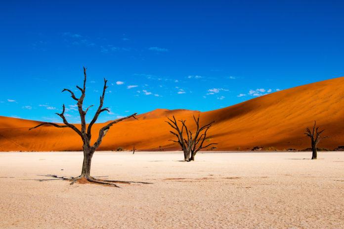 Das Deadvlei in der Wüste von Namibia