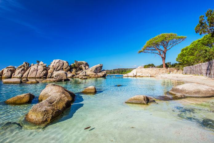 Strand von Palombaggia mit dem berühmten Pine Tree