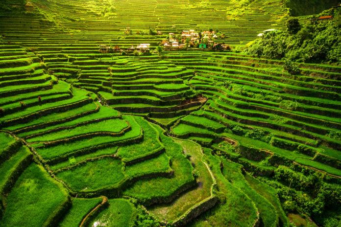 Die grünen Reisterrassen von Ifugao