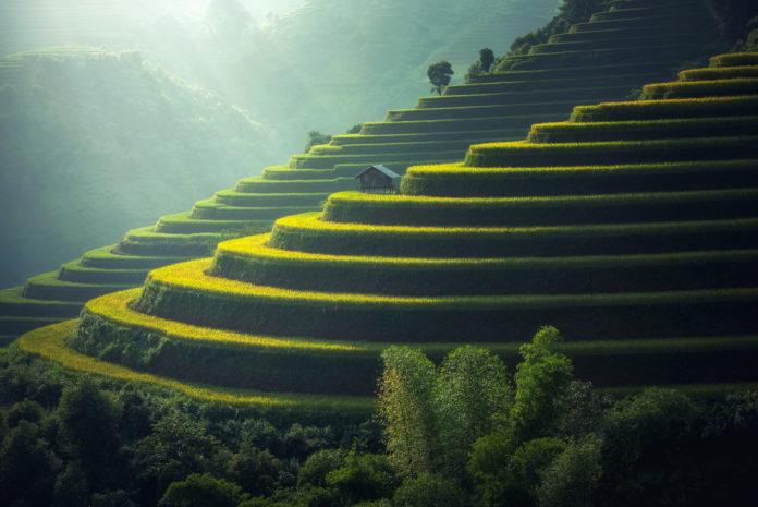 Reisplantage in Nordthailand