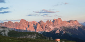Rosengarten in Südtirol bei Sonnenuntergang mit Kuh